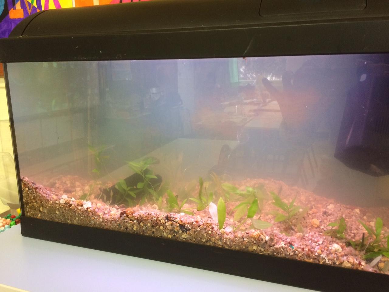 Trouble aquarium
