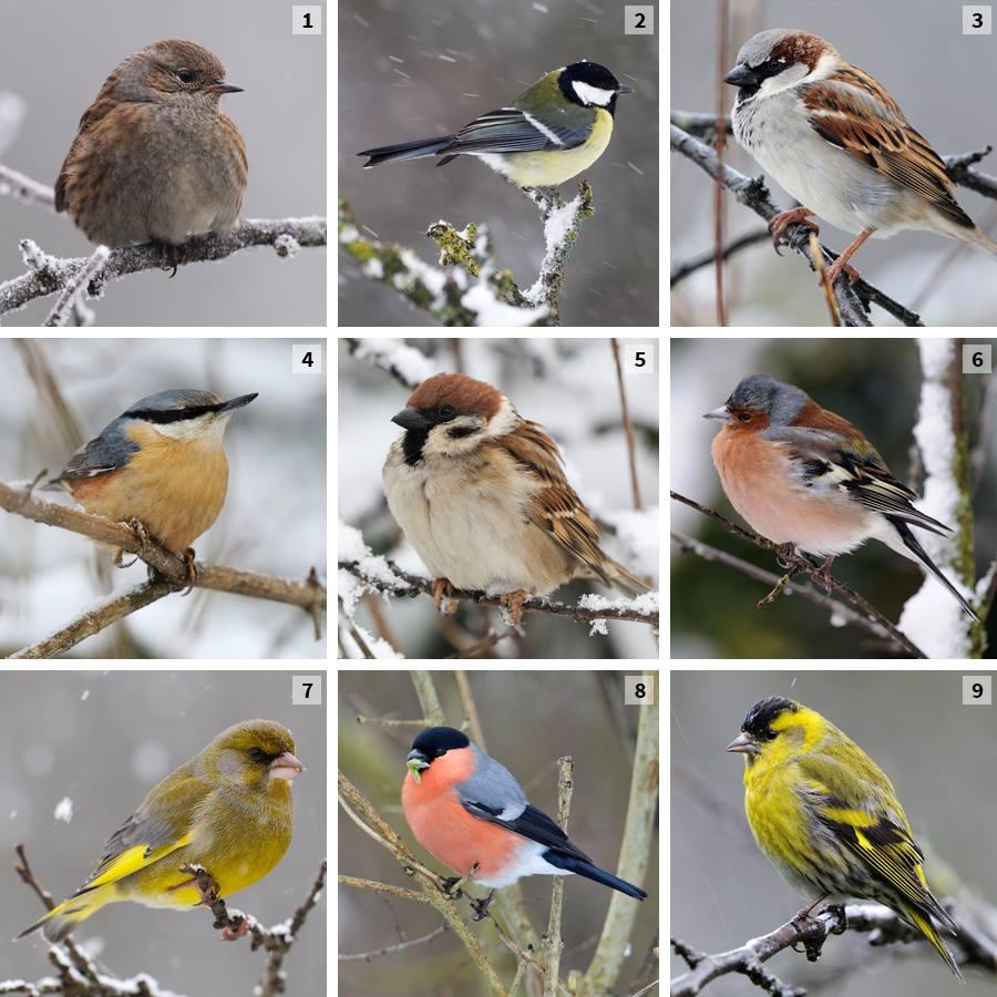 Comptage des oiseaux ecole el mentaire g rard claudel for Oiseaux de belgique reconnaitre