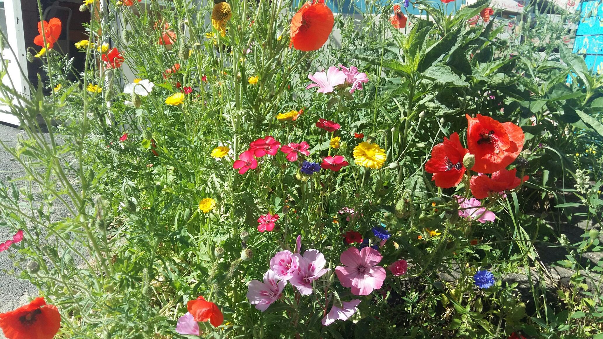 Des fleurs au jardin for Fleurs au jardin
