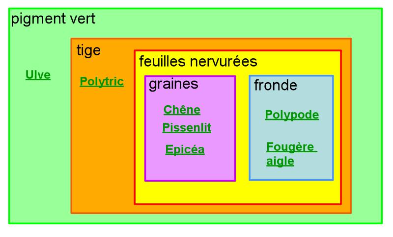 Correction de l'exercice de classification des végétaux ...